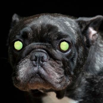 Leuchtende Augen bei Hunden in der Nacht