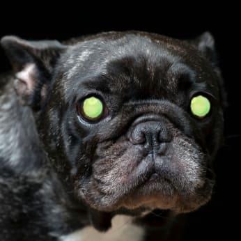 Leuchtende Augen von Hunden im Dunkeln