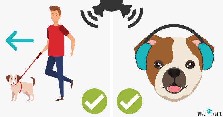 Maßnahmen zur Reduzierung lauter Geräusche bei Hunden