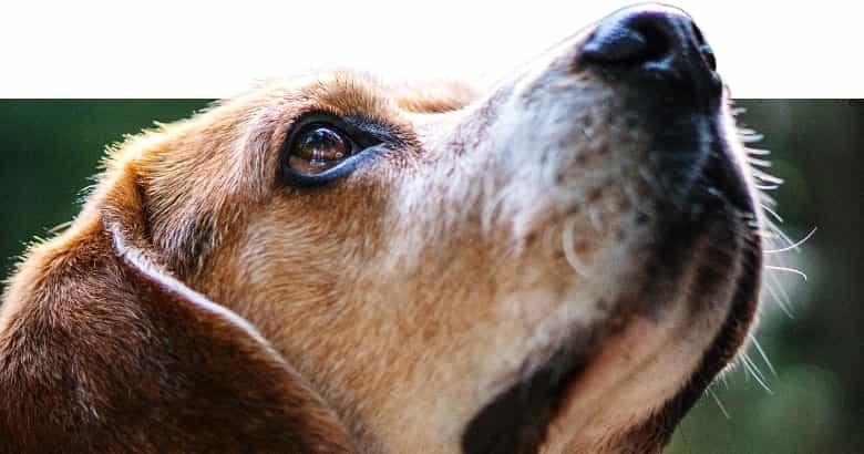 Nase eines Hundes