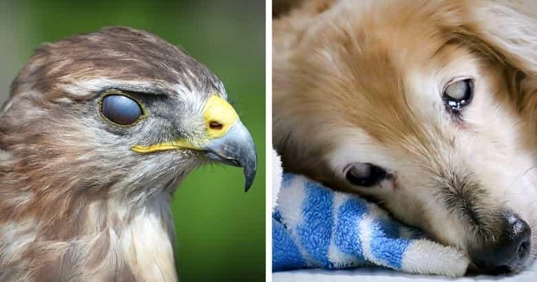 Nickhaut bei Hunden und Vögel