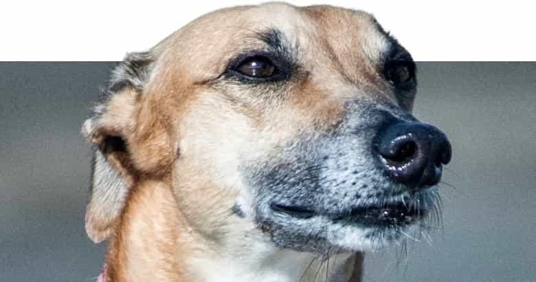 Niesender Hund