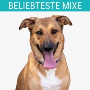 Schäferhund-Mixe