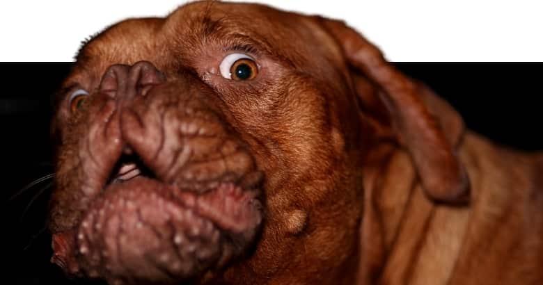 Schockierter Hund