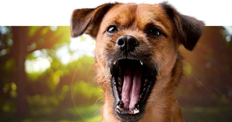 Schreiender Hund