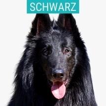 Schwarze Schäferhunde