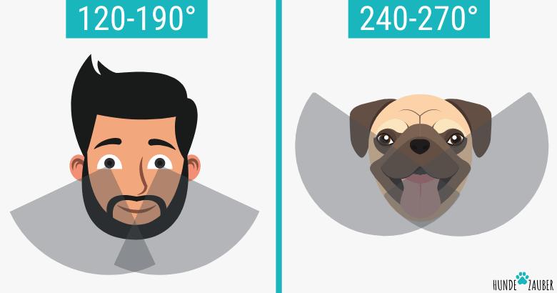 Sichtwinkel von Hunden und Menschen im Vergleich