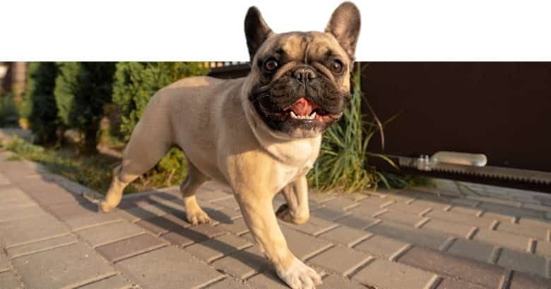 Taumelnder Hund