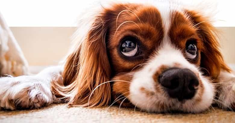 Unzufriedener Hund