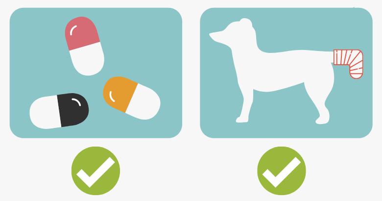Verband um Hunderute