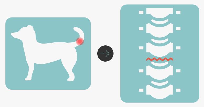 Verrenkung Rute beim Hund