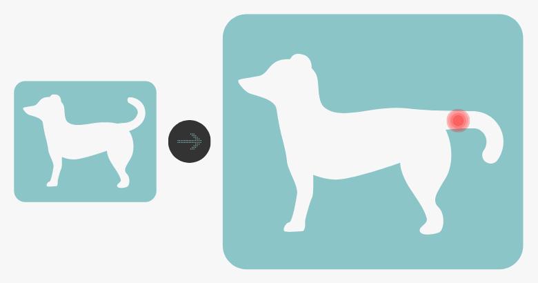 Wasserrute beim Hund